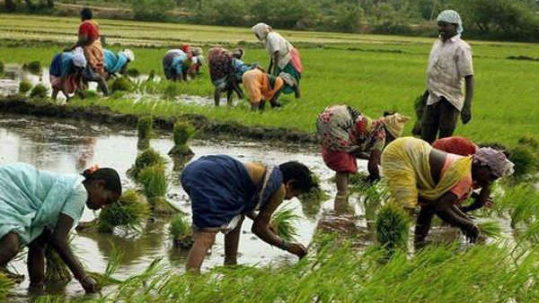 agriculture farmber 1 1568258723 1568267759 1601192375 1601263442