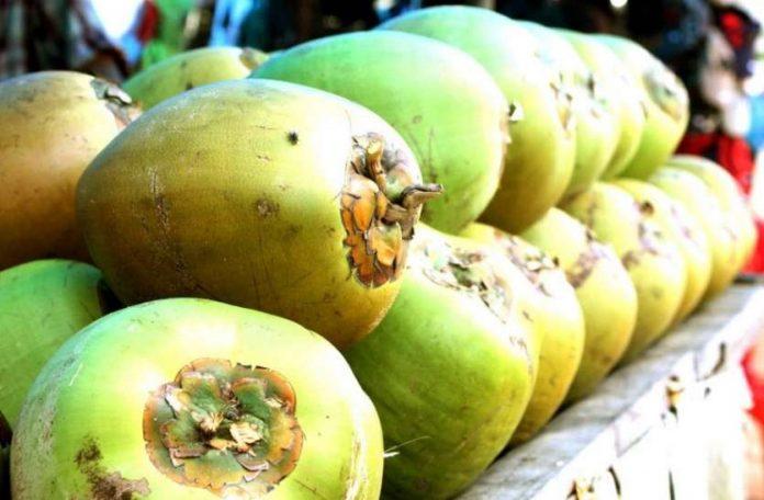 green coconut nariyal 6801000 835x547 m