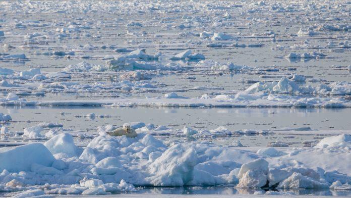 Arctic ocean drift ice the realm of the polar bear
