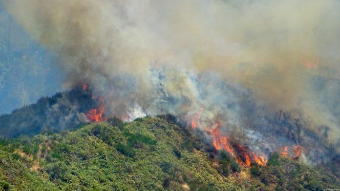 Forest fire above Serra de Agua 2 37385864294