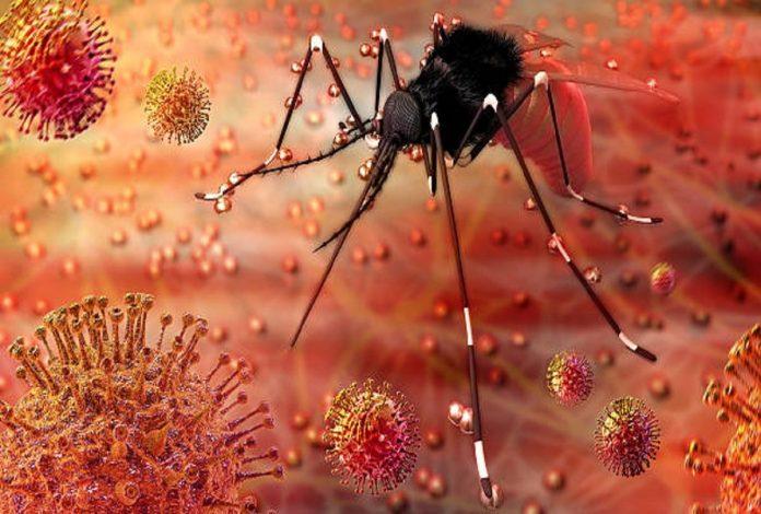 zika virus 1625812935